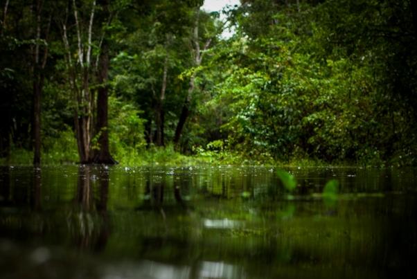 #Amazonas #Patrikmuchenberger #Photography